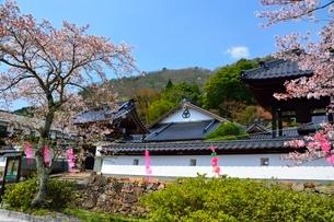 桜咲く竹田城 寺町通りの写真素材 [FYI01549092]