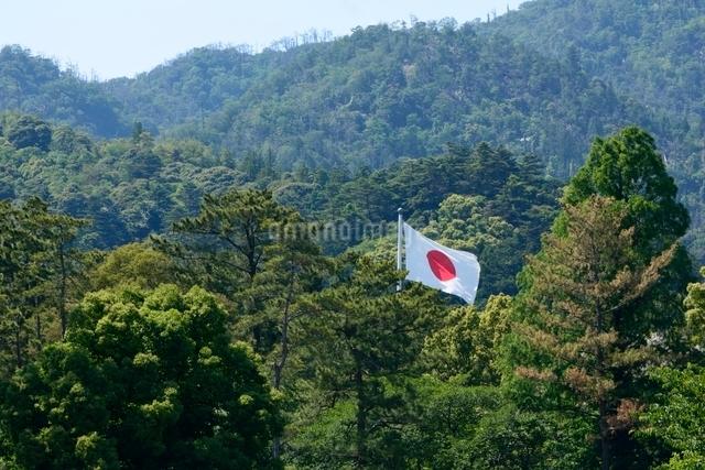 出雲大社 日本旗の写真素材 [FYI01549139]