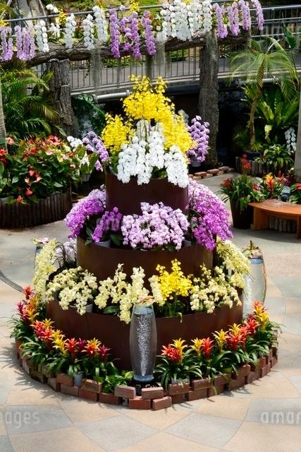 とっとり花回廊,フラワド-ム室内の花の写真素材 [FYI01549270]