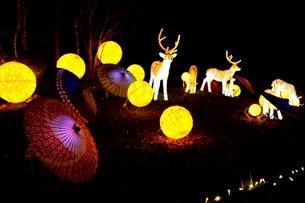 るり渓温泉,京都イルミエ-ル,天空の森の写真素材 [FYI01549314]