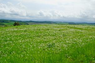 丘と白い草原の写真素材 [FYI01549544]