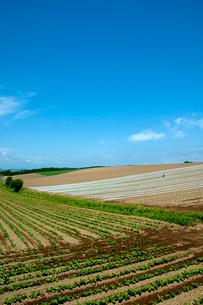 ジグザグの畑の写真素材 [FYI01549664]