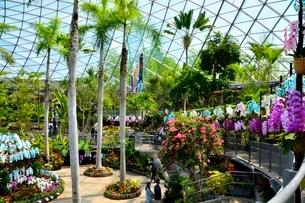 とっとり花回廊,フラワードーム内の写真素材 [FYI01549675]