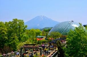 とっとり花回廊から大山の写真素材 [FYI01549978]