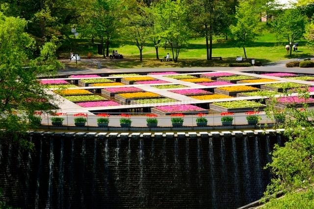 とっとり花回廊,水上花壇の写真素材 [FYI01550006]