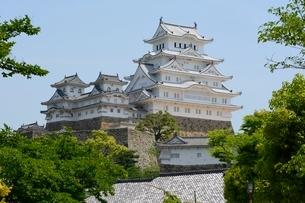 新緑 姫路城大天守と西小天守 の写真素材 [FYI01550191]