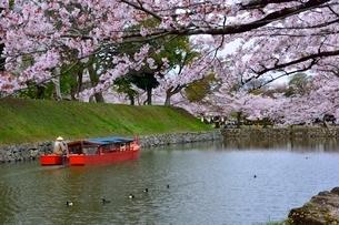 彦根城 桜並木と内堀屋形船の写真素材 [FYI01550344]