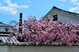 たつの満開の桜と醤油蔵の写真素材 [FYI01550379]
