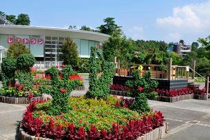 とっとり花回廊 園内菊のトピアリーの写真素材 [FYI01550474]