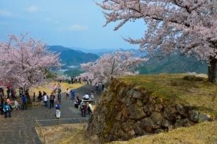 桜咲く竹田城跡 北千畳の写真素材 [FYI01550553]