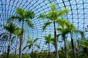 とっとり花回廊,フラワードーム内の写真素材 [FYI01550559]