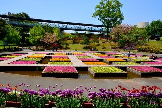 とっとり花回廊,水上花壇の写真素材 [FYI01550562]