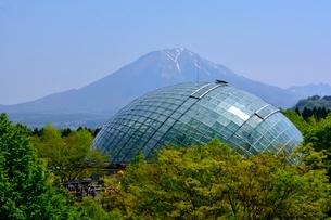 とっとり花回廊から大山の写真素材 [FYI01550650]