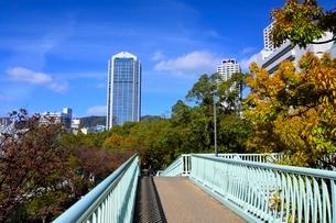 紅葉,神戸三宮,東遊園地から市役所を見るの写真素材 [FYI01550788]