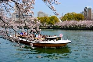 満開の桜,毛馬桜ノ宮公園と大川の観光船の写真素材 [FYI01550860]
