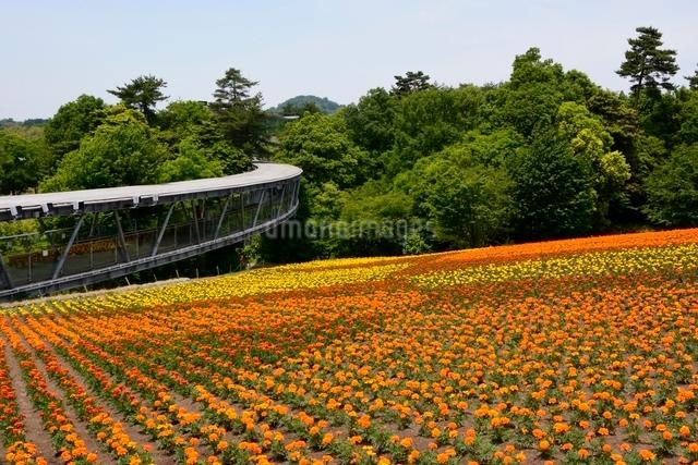 とっとり花回廊,花の丘の写真素材 [FYI01550950]