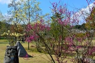 兵庫県立,フラワ-センタ-園内の写真素材 [FYI01550974]