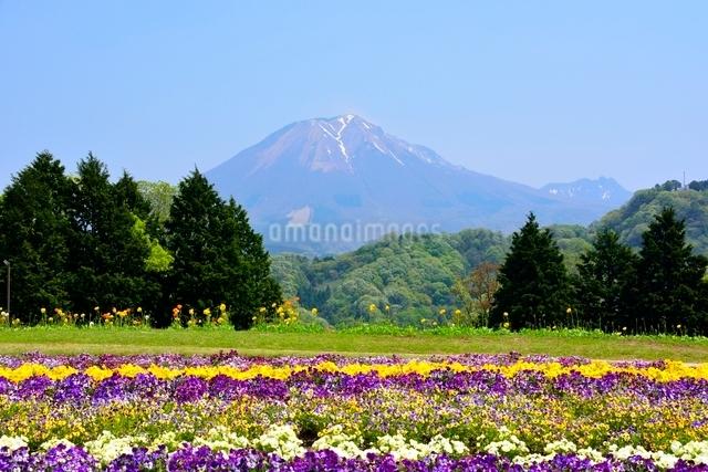 とっとり花回廊,山野草の小路から大山の写真素材 [FYI01551096]