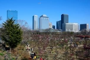 大阪城梅林公園からビジネスパークを見るの写真素材 [FYI01551105]