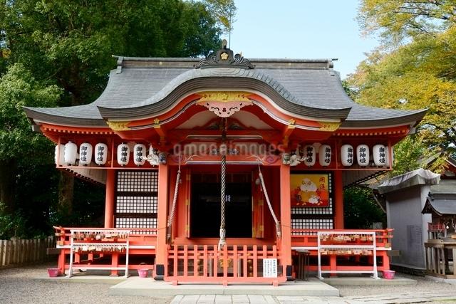 福知山,御霊神社本殿の写真素材 [FYI01551143]