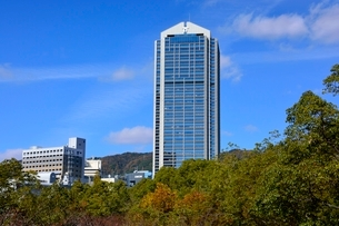 紅葉,神戸市役所の写真素材 [FYI01551183]