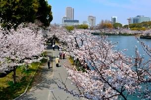 満開の桜,毛馬桜ノ宮公園と大川からのビル街の写真素材 [FYI01551457]
