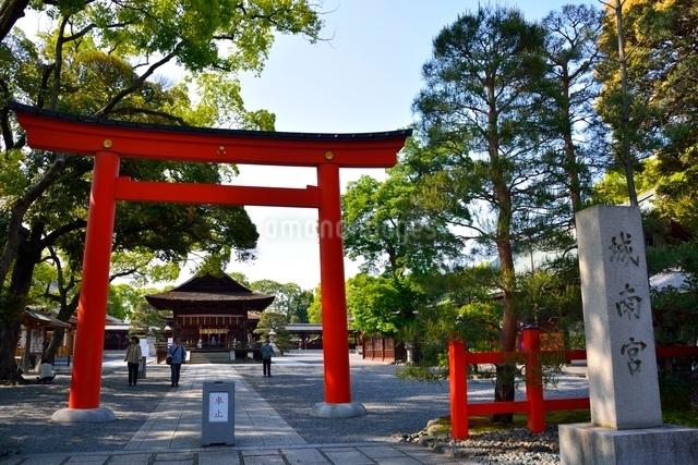 京都 城南宮鳥居と境内の写真素材 [FYI01551585]