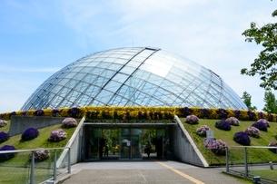 とっとり花回廊,フラワド-ムの写真素材 [FYI01551616]