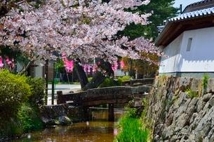 桜散る竹田城 寺町通りの写真素材 [FYI01551851]