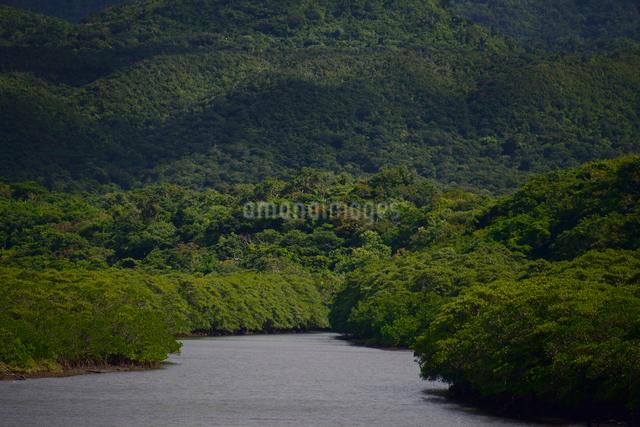 西表島の川と深い森の写真素材 [FYI01552760]