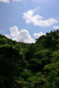 西表島の深い森の写真素材 [FYI01553372]