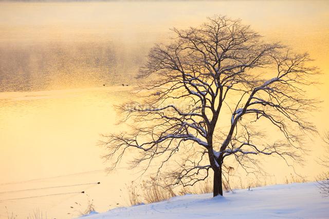 樹と木崎湖の写真素材 [FYI01554443]