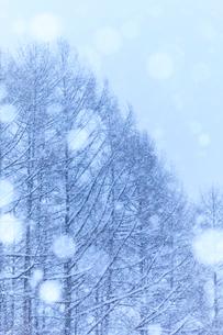 雪とカラマツの写真素材 [FYI01554882]