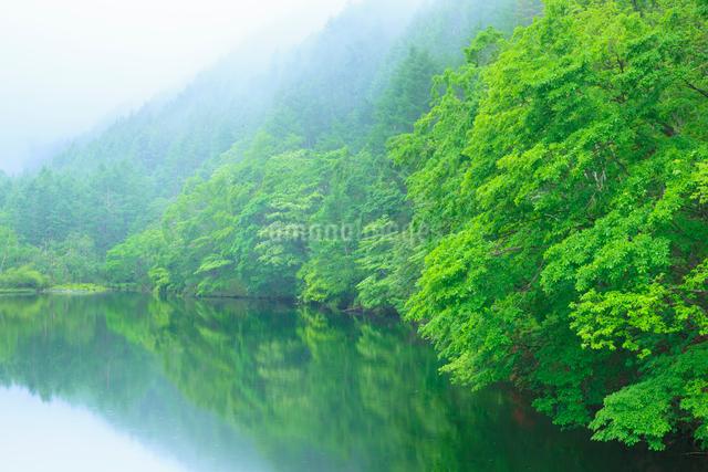 竜ヶ沢ダムと新緑の樹々の写真素材 [FYI01554965]