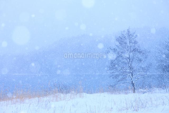 降雪と青木湖の写真素材 [FYI01555290]