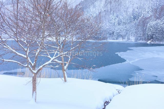 中綱湖の写真素材 [FYI01555456]