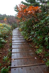 安達太良山山麓の中腹 雨にぬれる木道の写真素材 [FYI01555693]