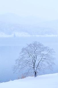 樹と木崎湖の写真素材 [FYI01555779]