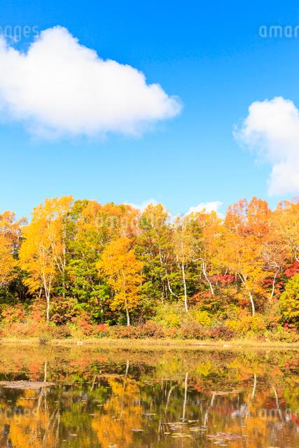 蓮池と青空と雲の写真素材 [FYI01555809]