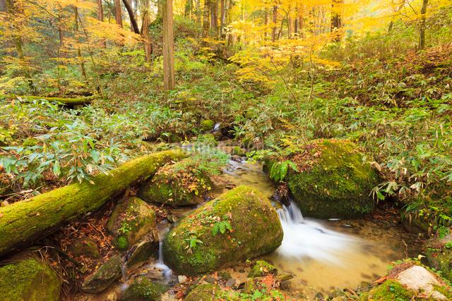 水木沢天然林の沢の写真素材 [FYI01555861]