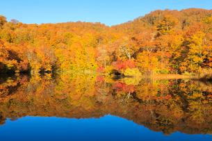 鎌池とブナの森の写真素材 [FYI01556059]