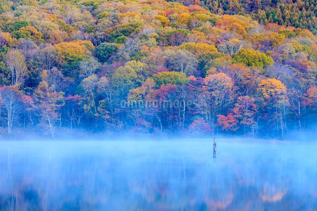 秋の鏡池の写真素材 [FYI01556314]