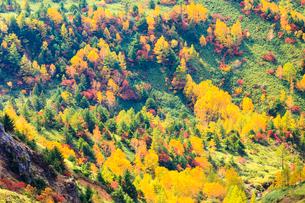 志賀高原の紅葉の写真素材 [FYI01556326]