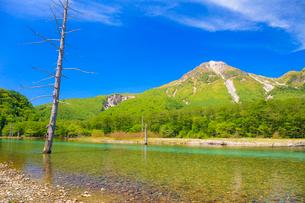 上高地 焼岳と大正池の写真素材 [FYI01556355]