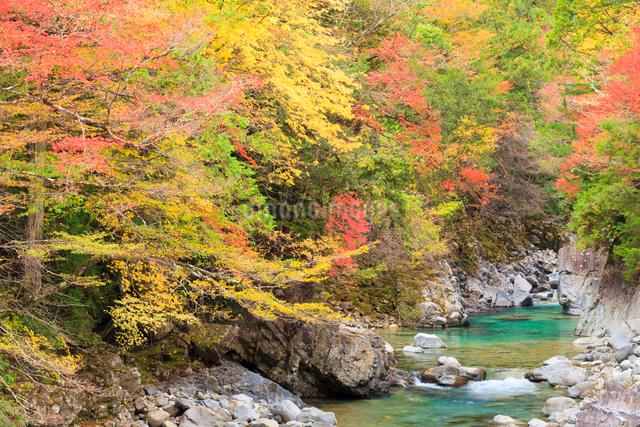 阿寺渓谷と紅葉の写真素材 [FYI01556441]