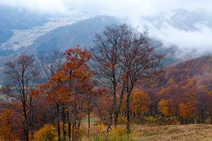 八海山中腹の紅葉の写真素材 [FYI01556448]