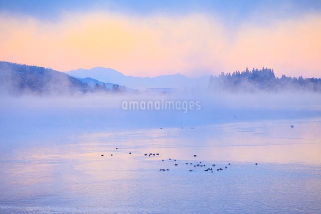 木崎湖とカモと朝霧の写真素材 [FYI01556469]