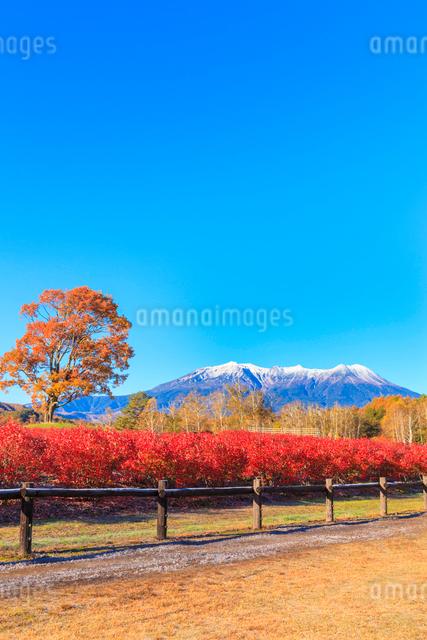 木曽馬の里から望む御嶽山の写真素材 [FYI01556472]