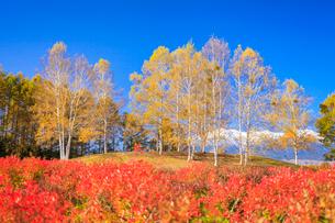 紅葉した木々と御嶽山の写真素材 [FYI01556496]