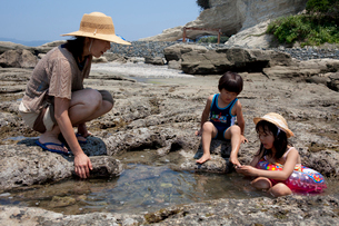 富浦海岸の磯遊びの写真素材 [FYI01556519]
